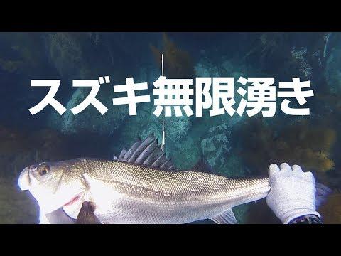 [下北半島魚突きVol.7] T島 スズキ、イシダイ他   Polespear fishing Shimokita Aomori JAPAN