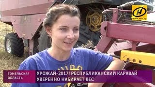 Отец и дочь: семейный экипаж намолотил тысячу тонн зерна