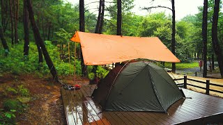 Rainy Day Camping iฑ the Pine Woods Campground - Solo Overnight under DD Tarp - Full Video