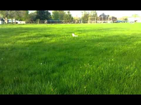 Dog Hopping Like A Rabbit