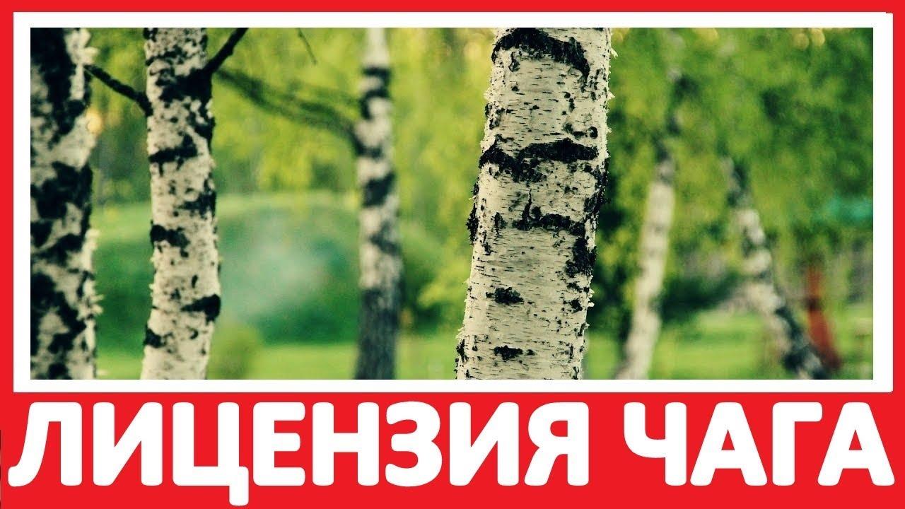 Гриб сморчок – это простое, надежное и доступное решение проблем со зрением. Стоимость препарата всего 600 рублей. Доставка почтой по рф.