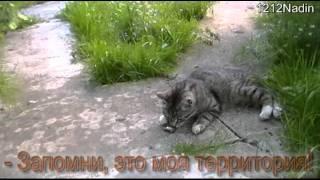 Трудовые будни кота Марсика: разборки с лягушкой.