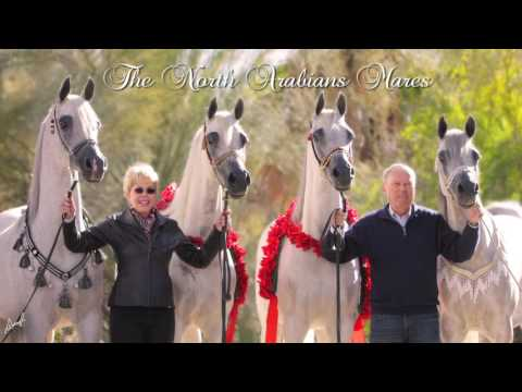 Arabians International for AHT