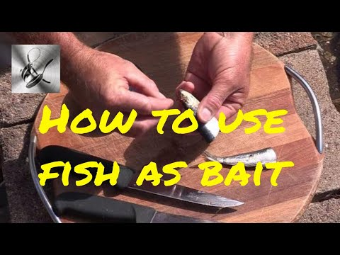 How To Use Sardine, Pilchards As Bait | The Hook And The Cook