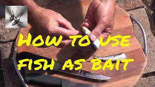 How to use Sardines & Pilchards as bait | The Hook and The Cook