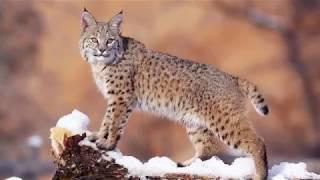 В мире животных In fauna