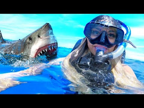 i-went-swimming-with-sharks...