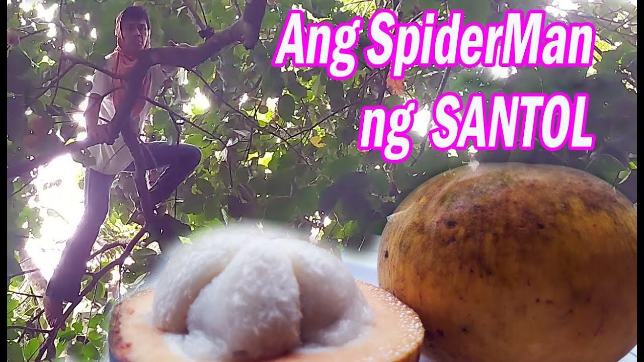 Buhay Probinsya - Spiderman Ng Santol At Swerte May Kabute
