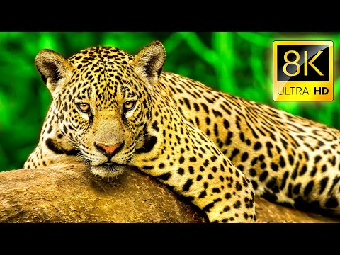 8K Exceptional Animals Collection in 8K ULTRA HD - Wildlife and Nature with Music 8K TV