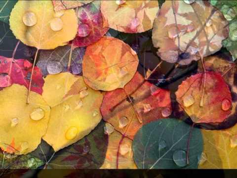 Осенние листья шумят и шумят в саду...