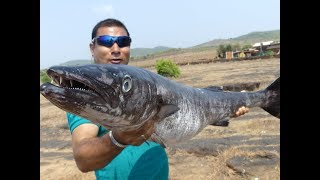 #NeverSeenBefore | #World Big Fish Curry Making | Shocking Size Fish Fry | Food