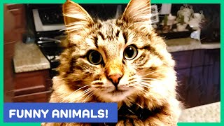 BEST ANIMAL VIDEOS OF THE WEEK! Funny and Cute Animals