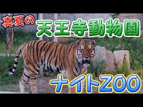 真夏の天王寺動物園ナイトZOO 2017