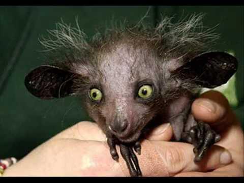 Ugly Animals Hässliche Tiere YouTube