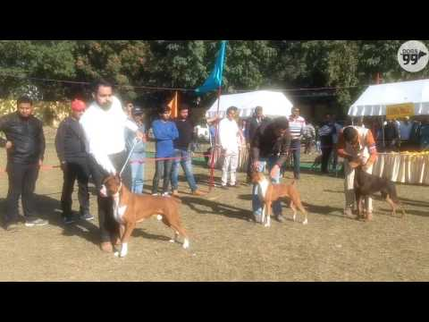 Moments from Dehradun Dog Show | 11 Dec 2016