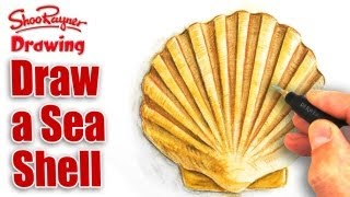 How to draw a sea shell with Watercolour Pencils