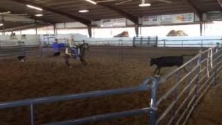 Juju- Jared Lesh cowhorses