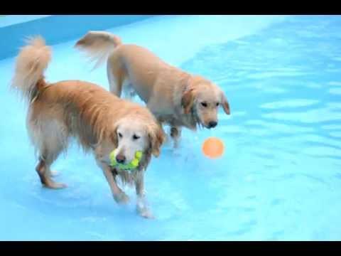 2011年8月1日とらじやっと入水の瞬間&オハナすいすい泳ぐ