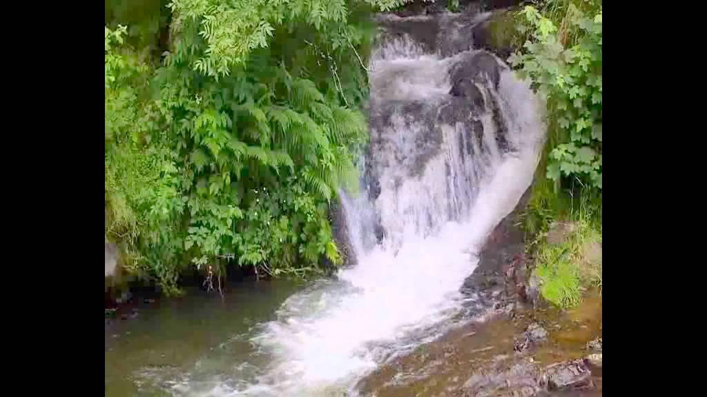 música de relajación, bosque, cascada, naturaleza ...