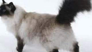 UN  MOTAN  CAT  UN  PISOI.wmv