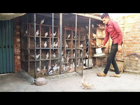New Setup kabouter k lye ghar banana How to make pigeon house with Bricks & Cement Final Part
