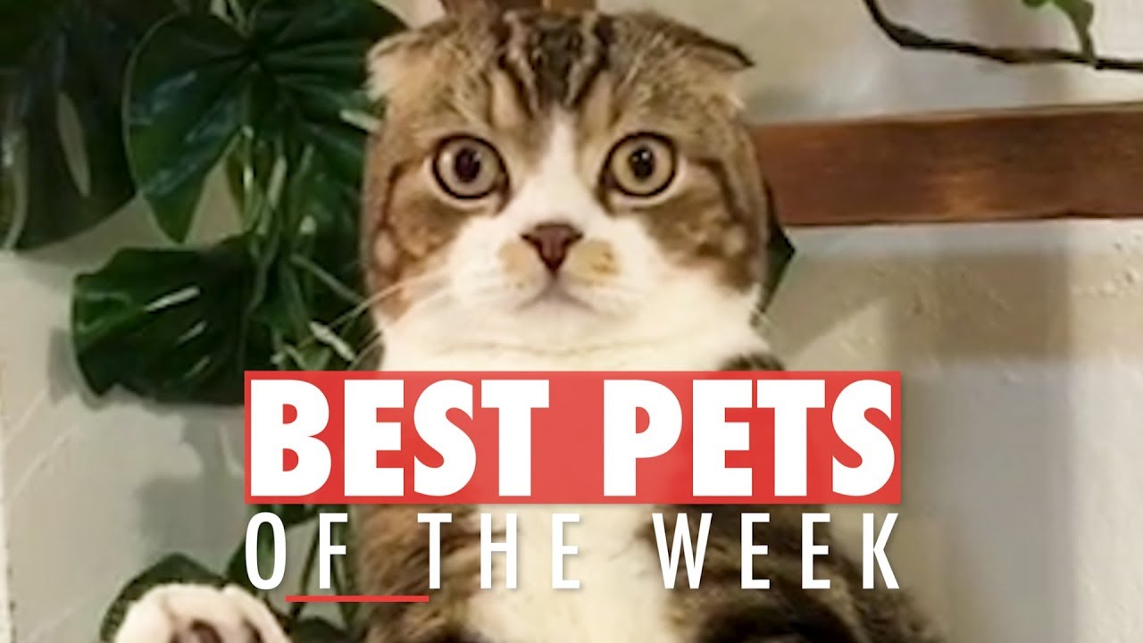 Download Best Pets of The Week Video Compilation | January 2018 Week 3