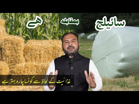 Download Silage Vs Hay    Which Fodder is better for Livestock    Dairy Farming in Pakistan