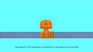 ATP Synthase the Motor of Life