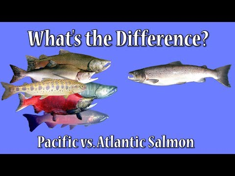 What's The Difference?  Atlantic Vs. Pacific Salmon