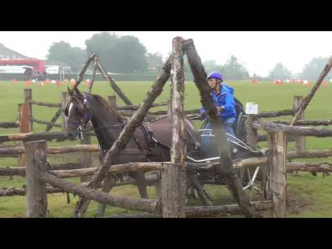 Novice Qualifier horse, obstacle driving