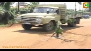 Residents Plant Bananas To Protest Neglected Kiambu County Road
