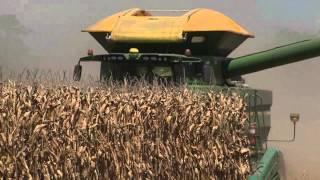 Bumper corn crop expected for La. farmers