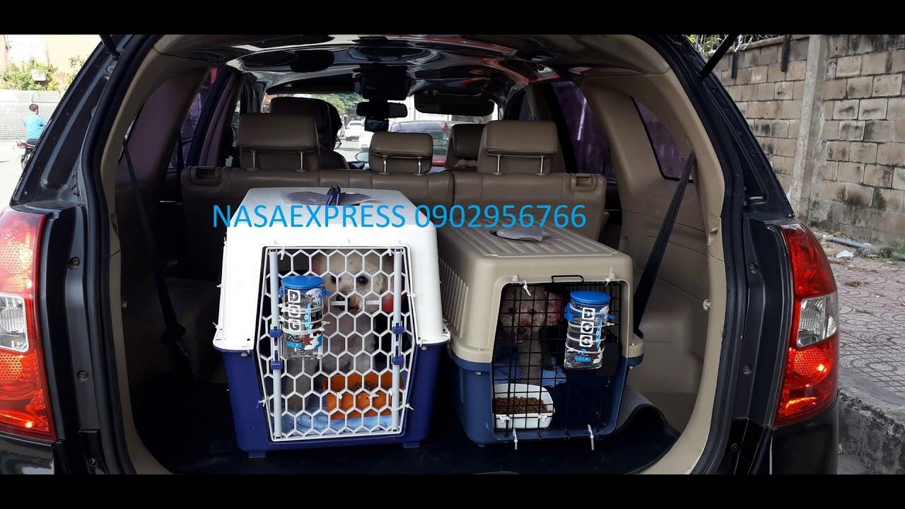 Vận Chuyển Chó ĐI Mỹ, Canada | 0902956766 Duy Nasa Express