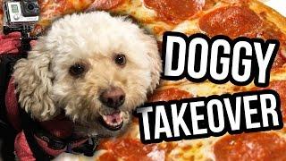 PUPPY PIZZA PARTY!! (Lunchy Break)