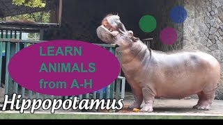 FUNNY ANIMALS IN ENGLISH. PART 1 (A - H )