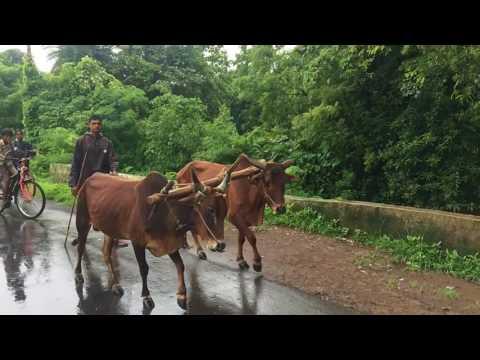 Jaatiya dhodiya part-2 (Suman musical party)
