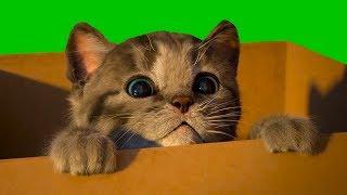 Маленький КОТЕНОК СИМУЛЯТОР котика видео для детей как мультик виртуальный питомец КИД ПУРУМЧАТА