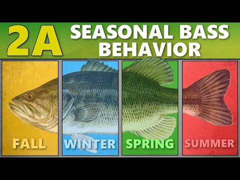INTERMEDIATE GUIDE To BASS FISHING: 2A - Seasonal Bass Behavior