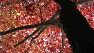 秋から冬に 心に響く歌です。 21歳の麻丘めぐみさんの絶唱です。