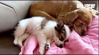 17살 노견이 세상을 무서워하는 어린 강아지에게 가르쳐주고 싶은 것ㅣOld Dog's Lesson To A Puppy Who's Scared Of Outside world Is