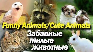 Забавные Милые Животные Сборник   Funny Cute Animals Compilation