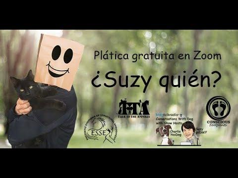 ¿Suzy quién?