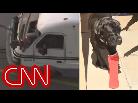 Tanner and Drew - Death-Defying Dogs Survive Speed RV Chase