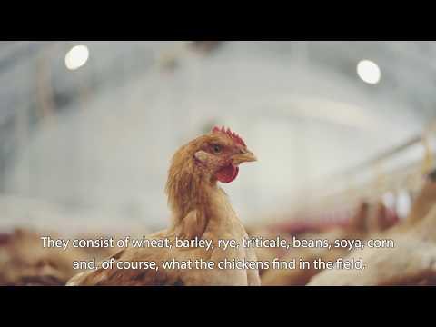 AUGA organic poultry farms