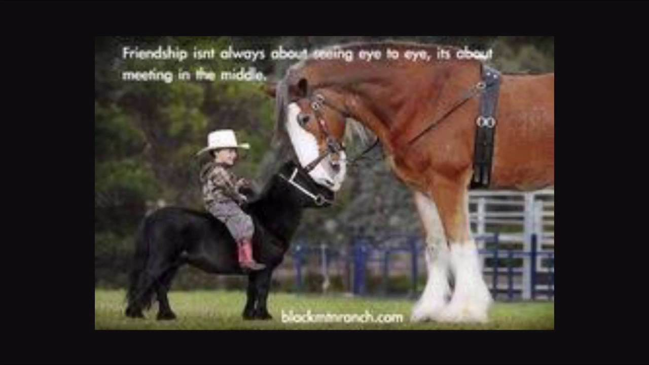 Funny Horse Quotes Funny horse quotes and sayings   YouTube Funny Horse Quotes