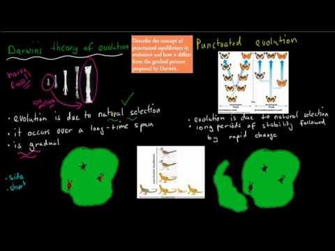 11. Punctuated Equilibrium vs Darwin's Evolution (HSC biology)