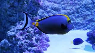 Смотреть видео Океанариум ТЦ РИО в Москве онлайн