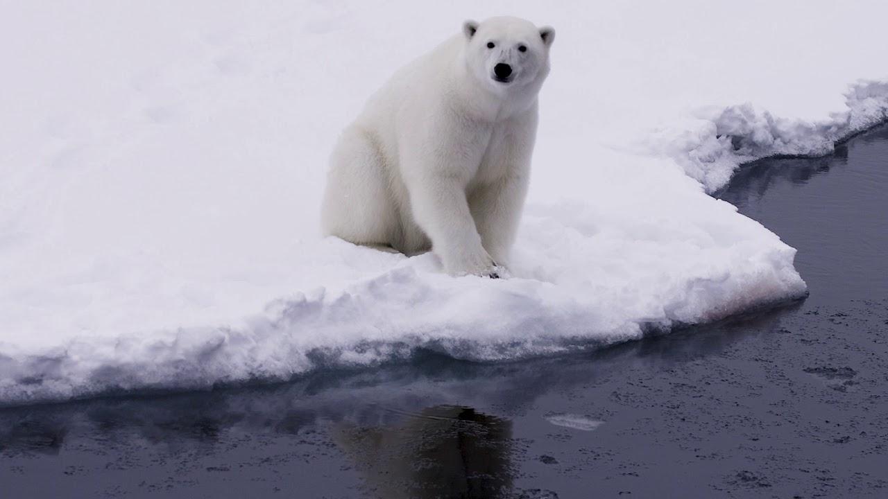 【動画】スピッツベルゲン探検クルーズ/北極クルーズ