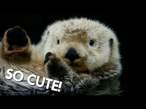 Otters aren't as Cute as you might think
