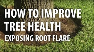 How to Improve Tree Health, Exposing Root Flare - The Dirt Doctor